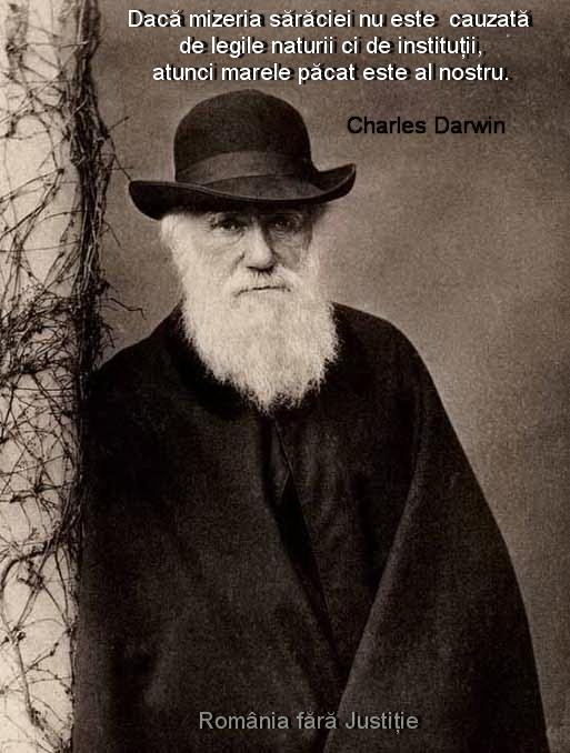 Mizeria saraciei - Darwin